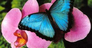 «Эффект бабочки»