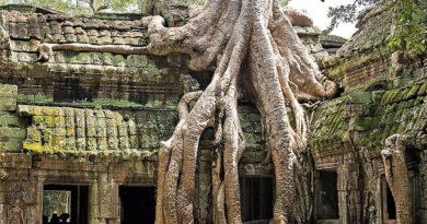Храм Та-Пром в Ангкоре. Стегозавр, кхмеры и Лара Крофт.